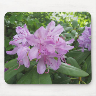 Purple Rhododendron flowers Mouse Pad