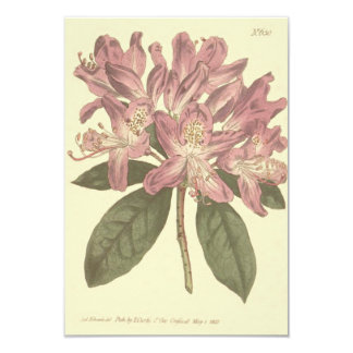 Purple Rhododendron Illustration Card