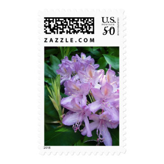 Purple Rhododendron - Medium Floral Postage