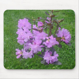 Purple Rhododendron Mousepad
