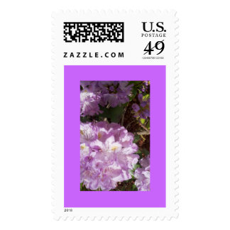 Purple Rhododendron Stamps