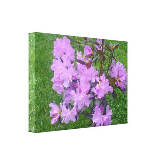 Purple Rhododendrons Canvas Prints