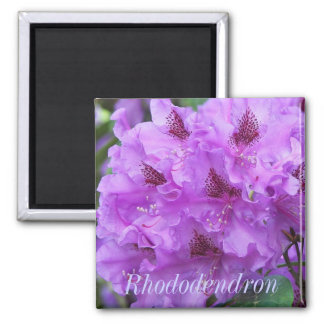 Purple Rhododendrons Floral 2 Inch Square Magnet