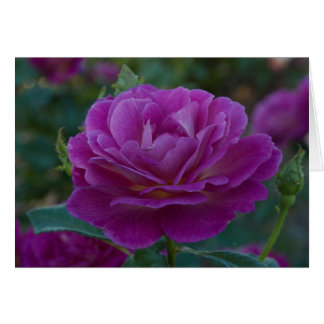 Purple Rose All Occasion Greeting Card