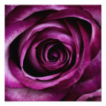 Purple Rose Art Photo