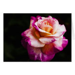 Purple Rose Blank Greeting Card