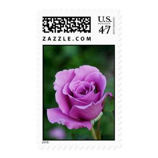 Purple Rose Bud Postage Stamp