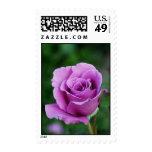Purple Rose Bud Stamp