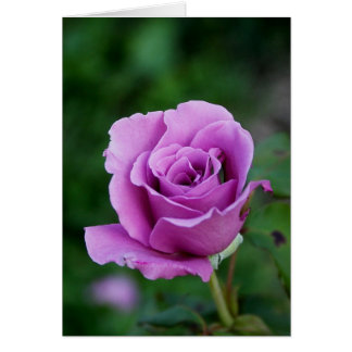 Purple Rose Card