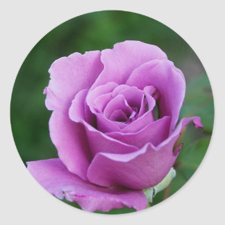 Purple Rose Classic Round Sticker