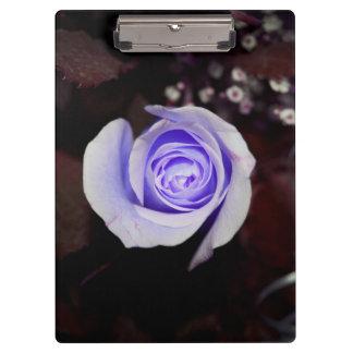 purple rose colorized flower against dark backgrou clipboard