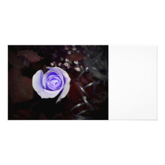 purple rose colorized flower against dark backgrou photo card