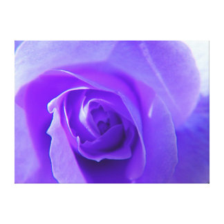 Purple rose flower macro picture. for home, office canvas print