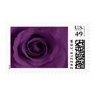 Purple Rose of Artsy Postage Stamp