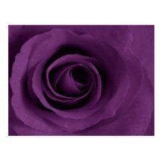 Purple Rose of Artsy Postcard