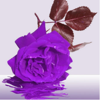 Purple Rose of Fibro Cutout
