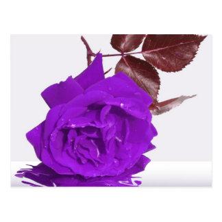 Purple Rose of Fibro Post Card