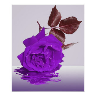 Purple Rose of Fibro Print