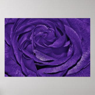 Purple Rose of Fibro Posters