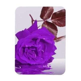 Purple Rose of Fibro Vinyl Magnet