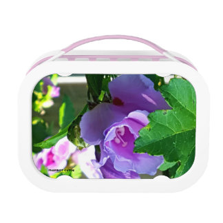 Purple Rose of Sharon or Hibiscus Syriacus Lunch Box