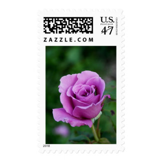 Purple Rose Postage