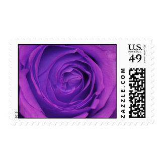 Purple Rose Postage