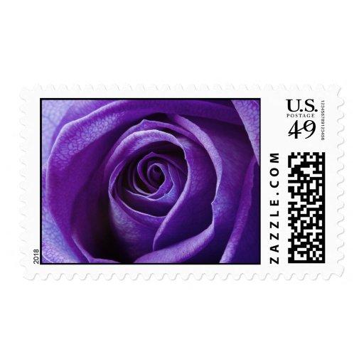 Purple Rose postage stamps