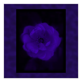 Purple Rose. With Black and Dark Purple. Poster