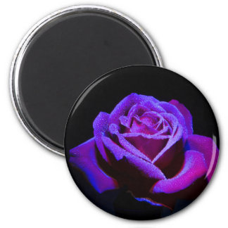 Purple Rose With Water Drops on Black Background Magnet