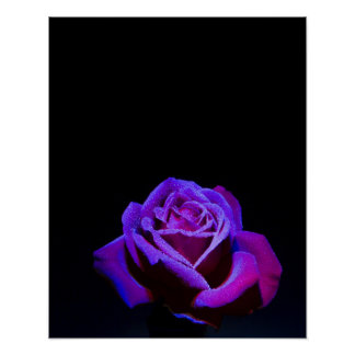 Purple Rose With Water Drops on Black Background Poster