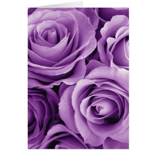 Purple Roses Bouquet Gift Item for Her Greeting Card