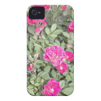 Purple Roses iPhone 4 Cover
