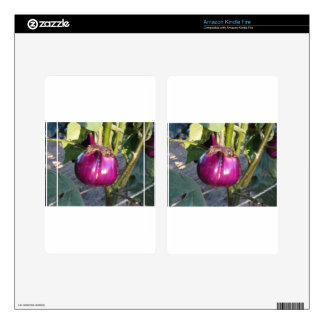 Purple round eggplant hanging on tree kindle fire decals
