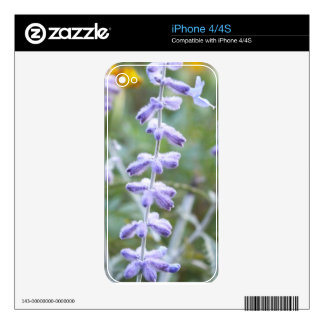 Purple Russian Sage - Pervoskia iPhone 4S Skin