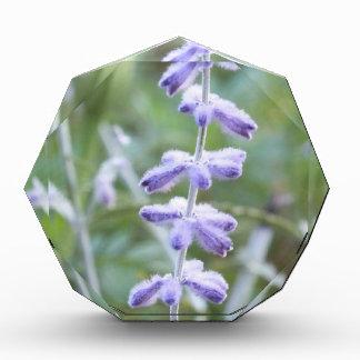 Purple Russian Sage -Pervoskia Photo Block