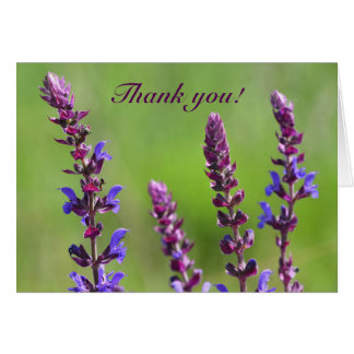 Purple sage salvia flowers thank you  note card