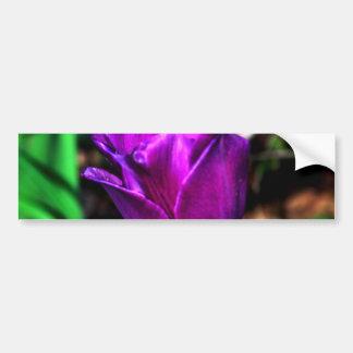 Purple Satin Tulip Bumper Sticker