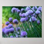 Purple Scallion FlowersPoster Print
