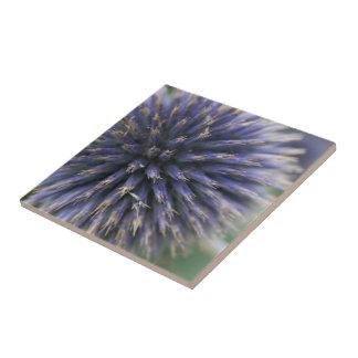 Purple Scottish Thistle Tile