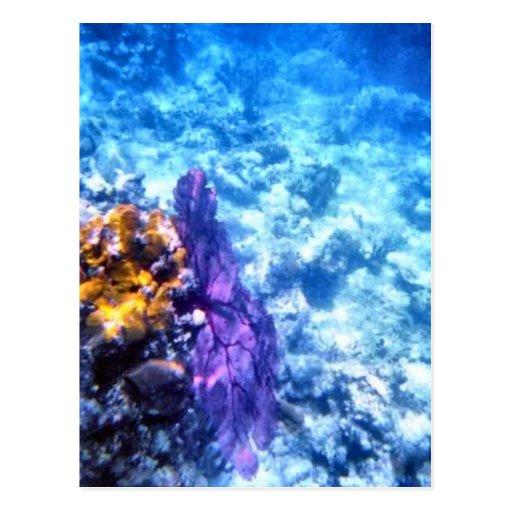 Purple Sea Fan Custom Postcard