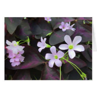 Purple Shamrock Blooms Photograph Card