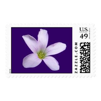 Purple Shamrock ~ stamp