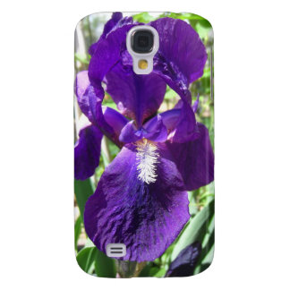 Purple Siberian Iris in the Garden Cover