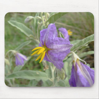 Purple silver-leaved nightshade flowers mouse pad