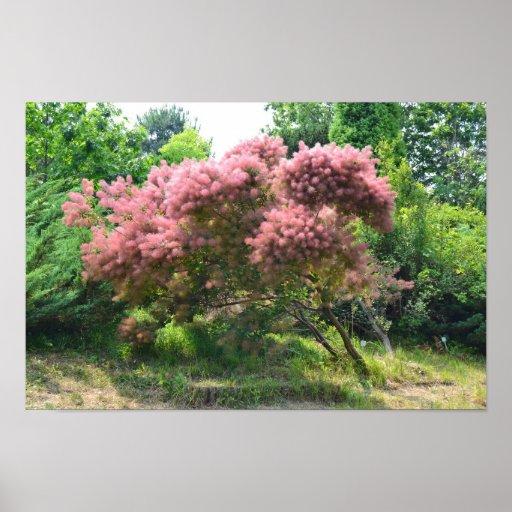 Purple Smoke Tree Print