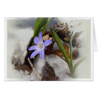 Purple snowflower card