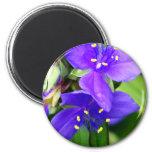 Purple Spider Flowers Magnets