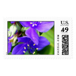 Purple Spider Flowers Postage