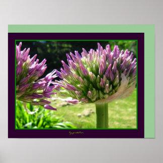 Purple Spike Flower Blooms Photo Poster